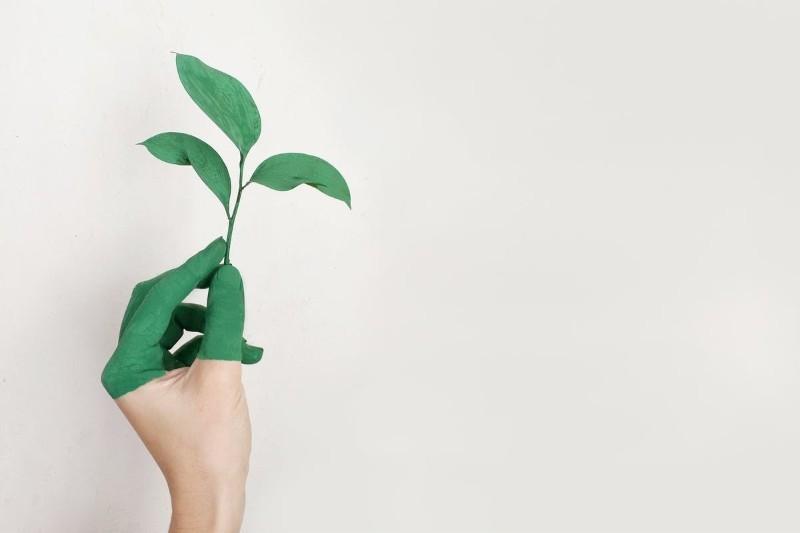 Praca po ochronie środowiska - co możesz robić? Ile zarobisz? (+Oferty)