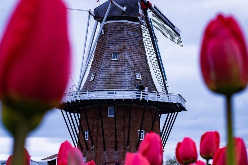 Praca w Holandii 2021: dla par, bez języka + Zarobki w Holandii